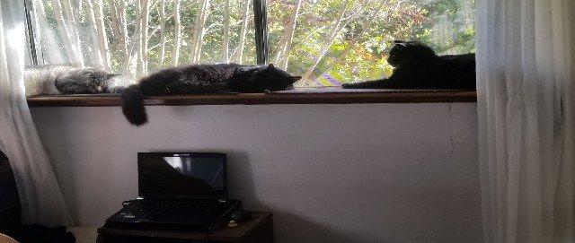 Small cats on cat shelf