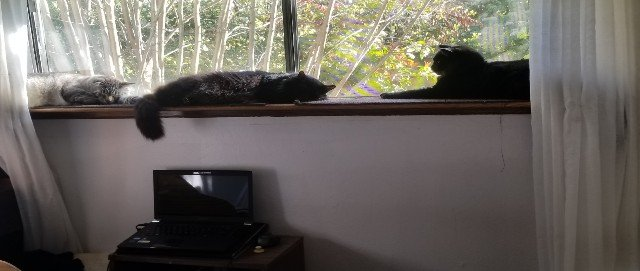 Small cats on cat shelf