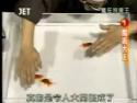 Man Trains Amazing Goldfish Synchronized Swimming Using Hand Signals