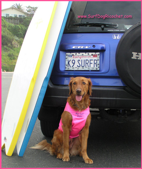 Surf Dog Ricochet, the SURFice dog who lives a lifestyle of helping others by pawing it forward.