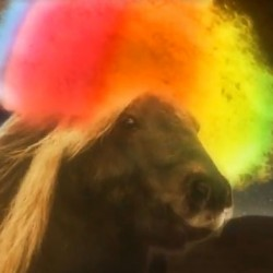 "A pony wearing an Afro dancing to ""Play That Funky White Boy""."